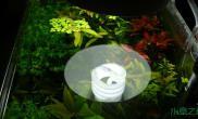 看看人家无灯无CO2的36窗缸水草缸在太阳下水草欣欣向荣的生长