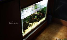 发个壁橱式水草缸水草缸有米有棒棒哒鱼缸水族箱