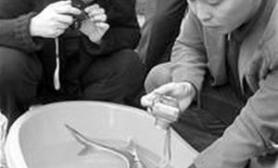 """长江边发现怪鱼为绝迹""""国宝""""(图)"""