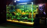 水草造景人生第一缸鱼缸水族箱