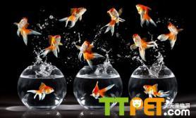 溶氧量对金鱼繁殖有哪些影响