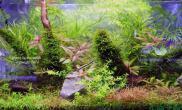 水族箱造景水草缸图片