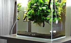 悬浮造景水草缸玩点不一样的