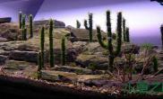 墨西哥风格造景过程(今年ADA作品)