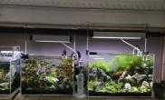 《智取威虎》:随心所欲水草缸自然才是最好的造景师