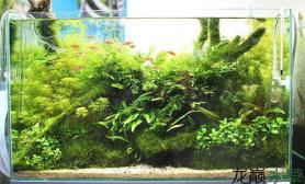 养殖水草缸注意事项