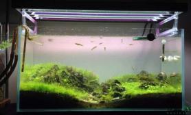 水草造景要翻缸了水草缸纪念下鱼缸水族箱