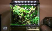 雨林生态缸(60-90CM)
