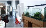 沉木青龙石造景缸与商业空间-42