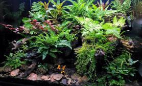 雨林生态缸90尺寸力作