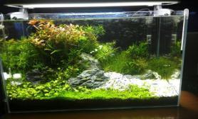 水草造景菜鸟的小草缸