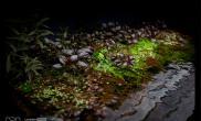 沉木青龙石水上叶造景11