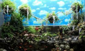 """关于""""悬浮山""""120cm水陆缸的更新!!!"""