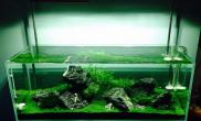 青龙石缸水草缸绿的很走心