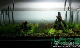 水草造景1200新翻的缸沉木杜鹃根青龙石水草泥