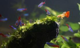 鱼缸造景(更新)阳台上的森林《隐居阁》,分享经验~鱼缸水族箱开缸110*45*45鱼缸水族箱连载中……