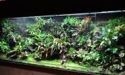 老外超级大缸造景雨林生态缸