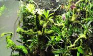 [转载]亚马逊植物进缸状态记录