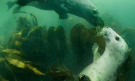 超有镜头感的小海豹(多图)