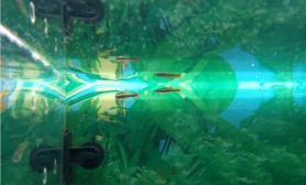 水草造景野生白云金丝鱼缸水族箱原来是国家2级保护物种鱼缸水族箱我犯法了吗?