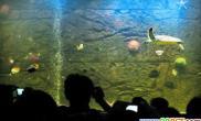 步行街现海景橱窗漂亮巨型鱼缸亮相(图)