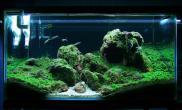 黑石头搭配珊瑚MOSS幽幽中型缸水草作品