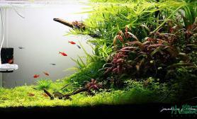 五颜六色谜一样的水草世界