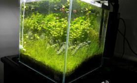 头一次晒缸水草缸办公室30石景水草缸请大家看看是不是成景了?