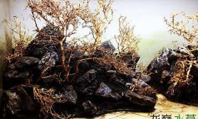 泰国沉木骨架