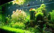 大家帮忙看看这个景都是用的什么水草?