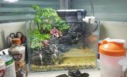 办公室小缸第一次的水陆水草缸请教后期维护