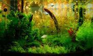 水草缸造景沉木水草泥化妆砂青龙石60cm尺寸设计07