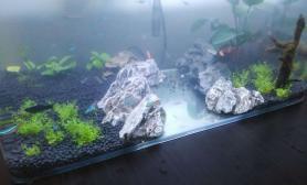 翻缸、上次长藻