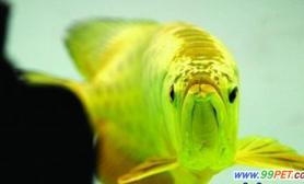 南京一水族馆现天价金龙鱼(图)