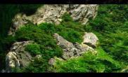 鱼缸造景造景之路:水草造景