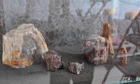 水草造景纯新手从新上图水草缸潜水2月和朋友一起开的1米木化石缸