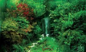 鱼缸造景水草缸中瀑布的製作