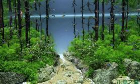 水草造景——侧面观