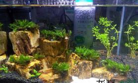 水草造景新手的木化石景小缸