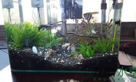 水草造景新开小草缸