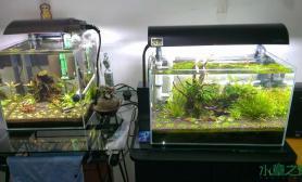 水草造景水晶虾缸