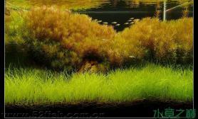 【转载】草缸中的秋天