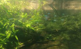雾霾缸清了水草缸初成景水草缸无CO2