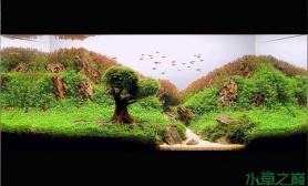 水草造景作品:水草造景(90cm)-33