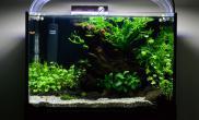 【分享】国外低维护简易水草缸
