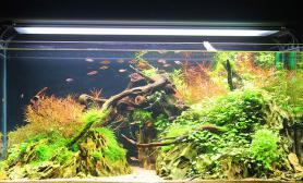 曲径通幽-100CM自然水景