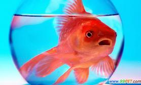 养观赏鱼成市民新爱好(图)