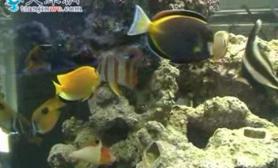 天津滨海世界级观赏鱼科技园区交易市场开业(多图)
