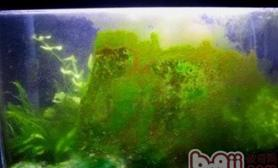 绿尘藻的治理方法