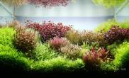 荷兰多彩水草造景(60CM)